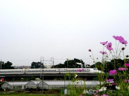 Imgp5431