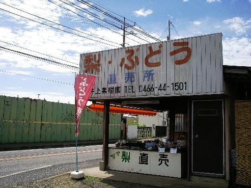 Imgp6438