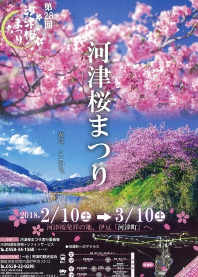 201802kawadusakura_2